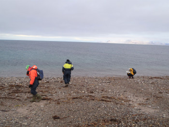 Collecting bacteria from a beach in Svalbard, Norway. Photo: Adele Williamson
