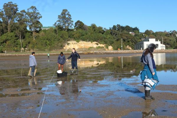 Investigating the effects of the proximity of roads on mudflat internal biodiversity